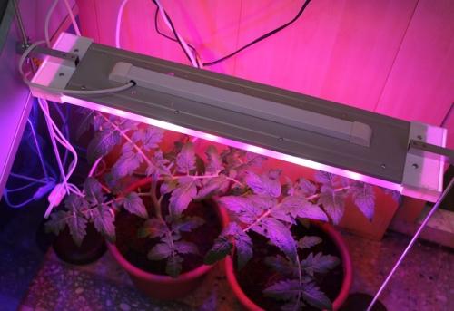 Светодиодные лампы для подсветки рассады своими руками